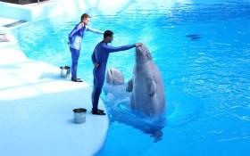 Дельфиний в Новосибирске
