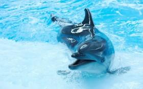 Океанариум Дельфиний